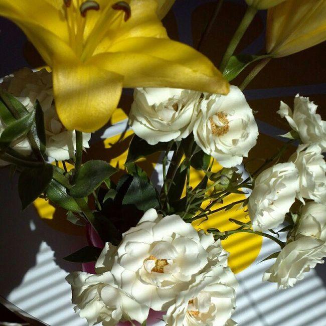 Flowers Lilies Roses Window shadow light sanantonio satx
