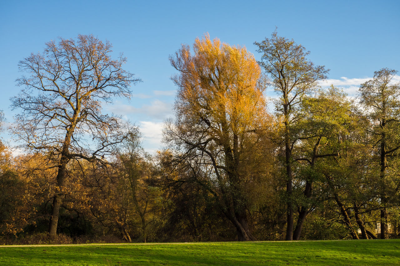 autumn, tree, beauty in nature, tranquility, change, nature, scenics, tranquil scene, day, outdoors, leaf, no people, grass, landscape, bare tree, growth, forest, branch, sky, golf course