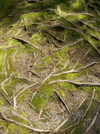Roots Of Tree Nature Close-up Beauty In Nature Azores, S. Miguel Green Color