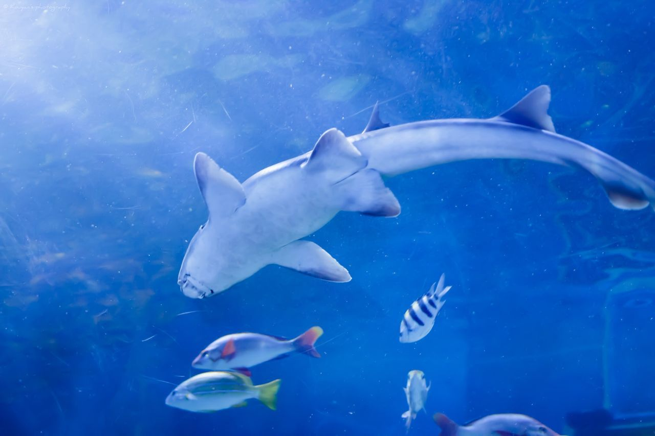 Beautiful stock photos of shark, Animal Themes, Animals In The Wild, Blue, Choice