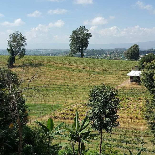 Myanmar Taunggyi Scenery Nature Awaken your senses with the beauty of nature Vineyard