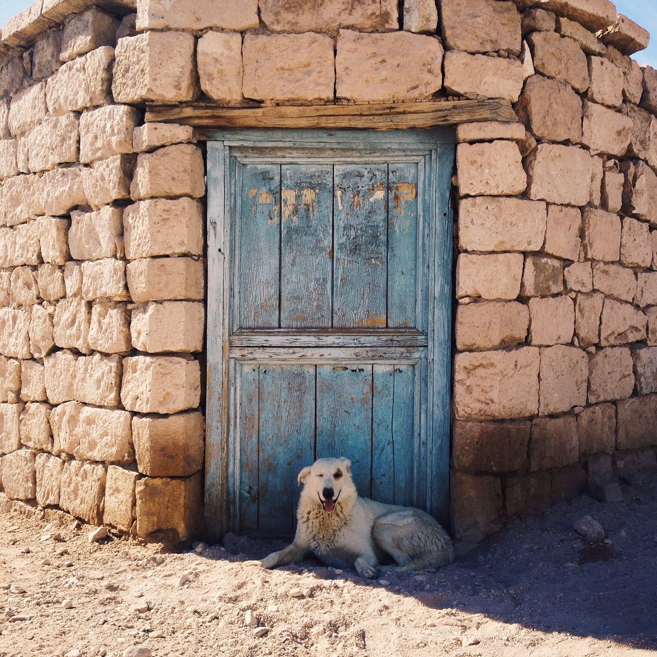 The Gatekeeper Adapted To The City Animal Themes Architecture Brick Wall Building Exterior Built Structure Close-up Day Dog Domestic Animals Domestic Cat House Mammal No People One Animal Outdoors Pets Portrait