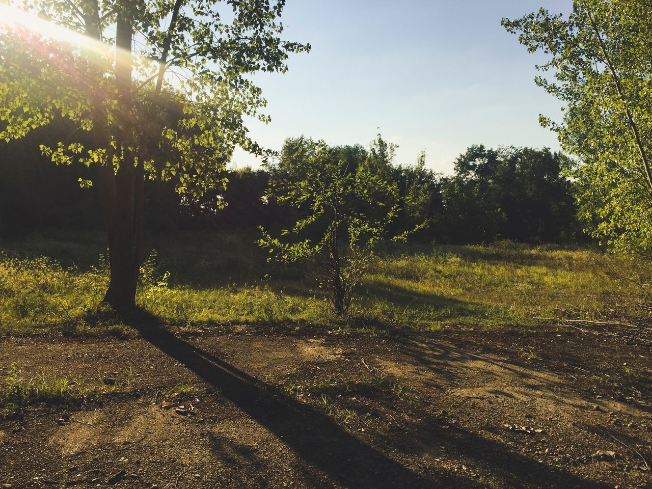 tree, nature, sunlight, no people, outdoors, growth, day, tranquility, tranquil scene, scenics, beauty in nature, landscape, sky