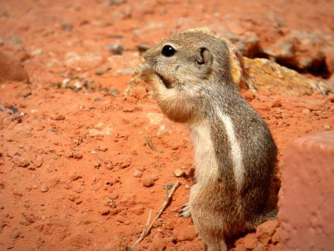 Little chipmunk. Chipmunk Wildlife Photography No People Nature Naturelovers Small Animal Outdoors Animal Themes Animal_collection One Animal Close Up Wildlife Cute Nature_collection Day Close-up