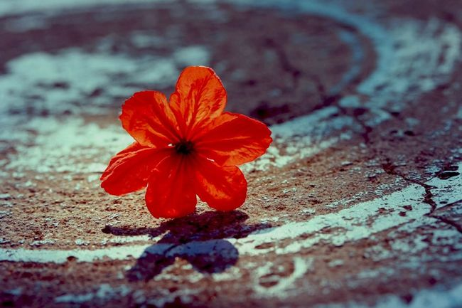 Red flower on wood table Flower Flowers Table Red Red Flower Wood Nature Open Edit