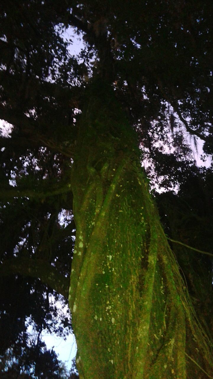 tree, nature, growth, low angle view, no people, green color, beauty in nature, tranquility, outdoors, tree trunk, forest, day, tranquil scene, scenics, branch, sky, close-up