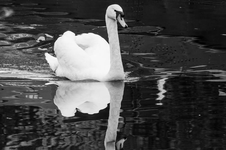 Animal Themes Animals In The Wild Bird No People One Animal Outdoors Reflection Water