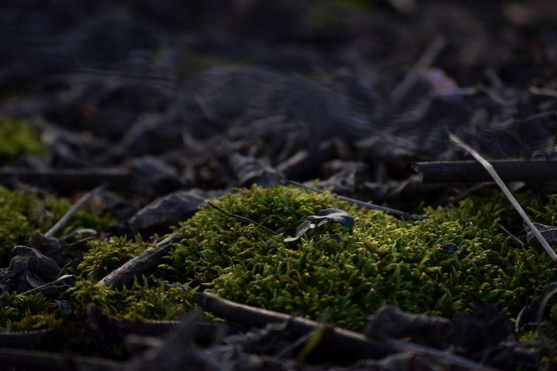 Nature Growth Green Color Moss Close-up Sun Sunlight Contrast First Eyeem Photo EyeEmNewHere