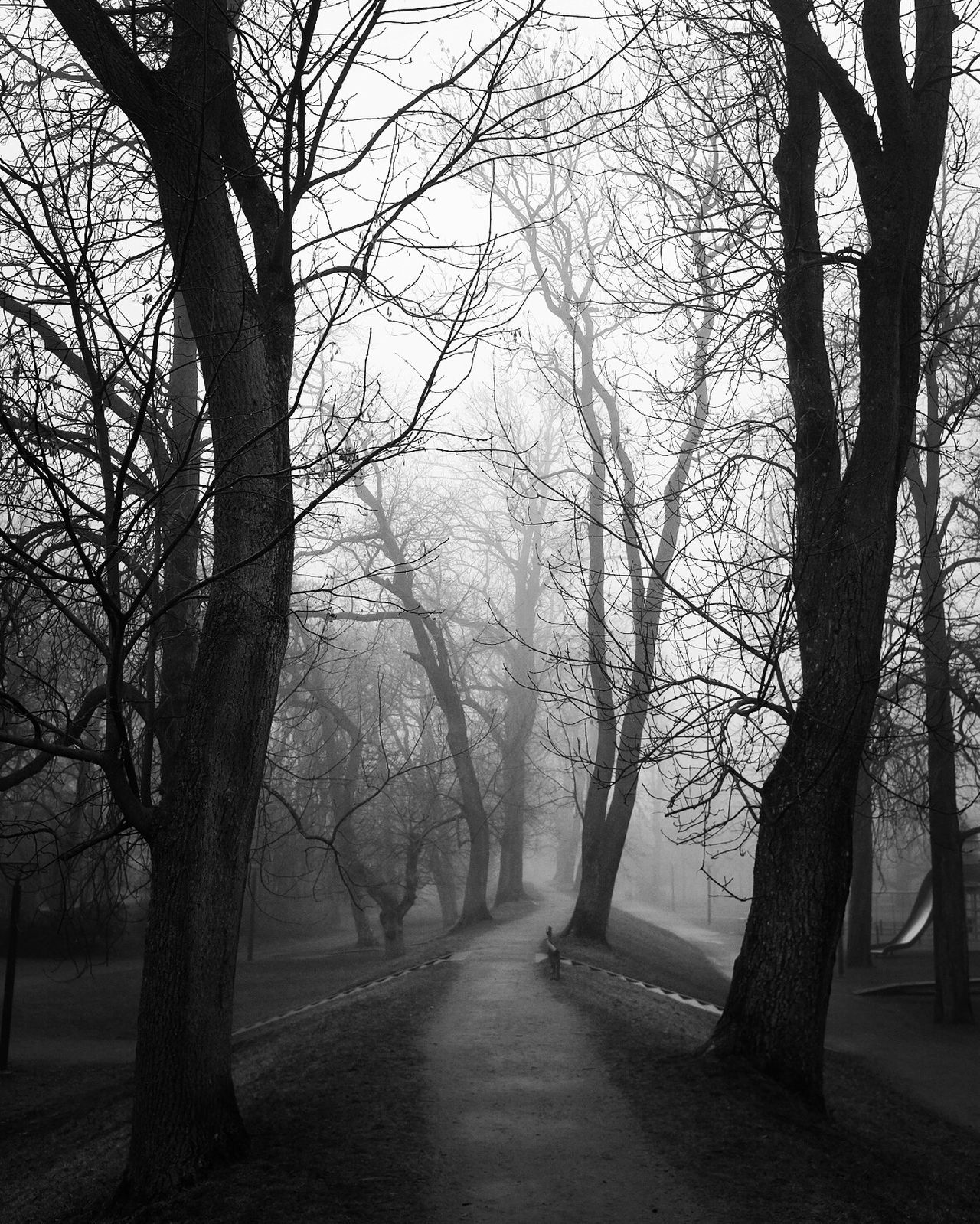 Tree Bare Tree Tranquility Scenics Beauty In Nature Fog No People Vanishing Point Monochrome Street Photography Black And White Silhouette EyeEm Best Shots - Black + White Tranquility