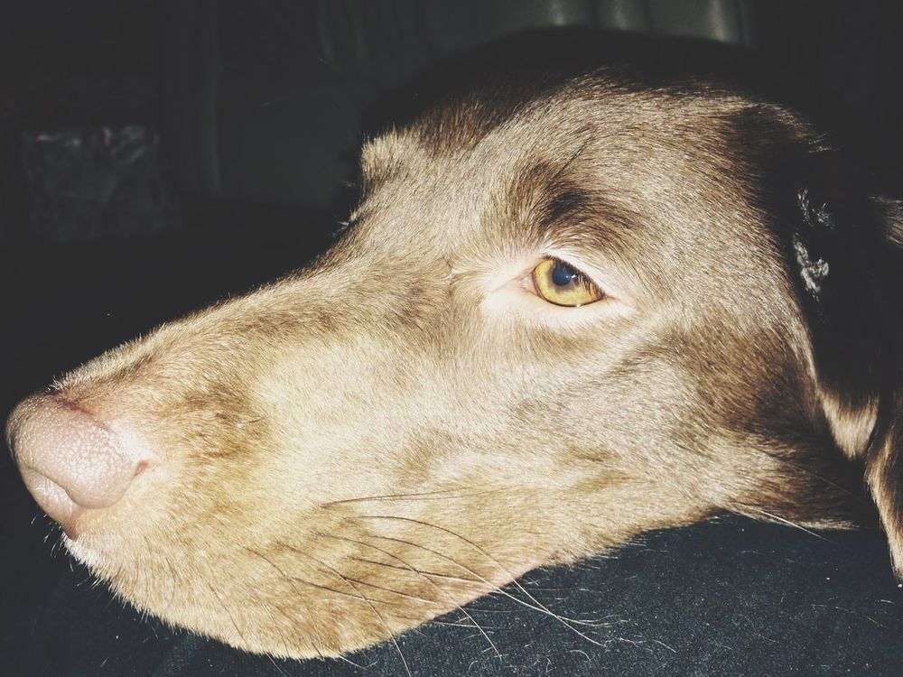 Jessie Dog Cute Pets My Dog