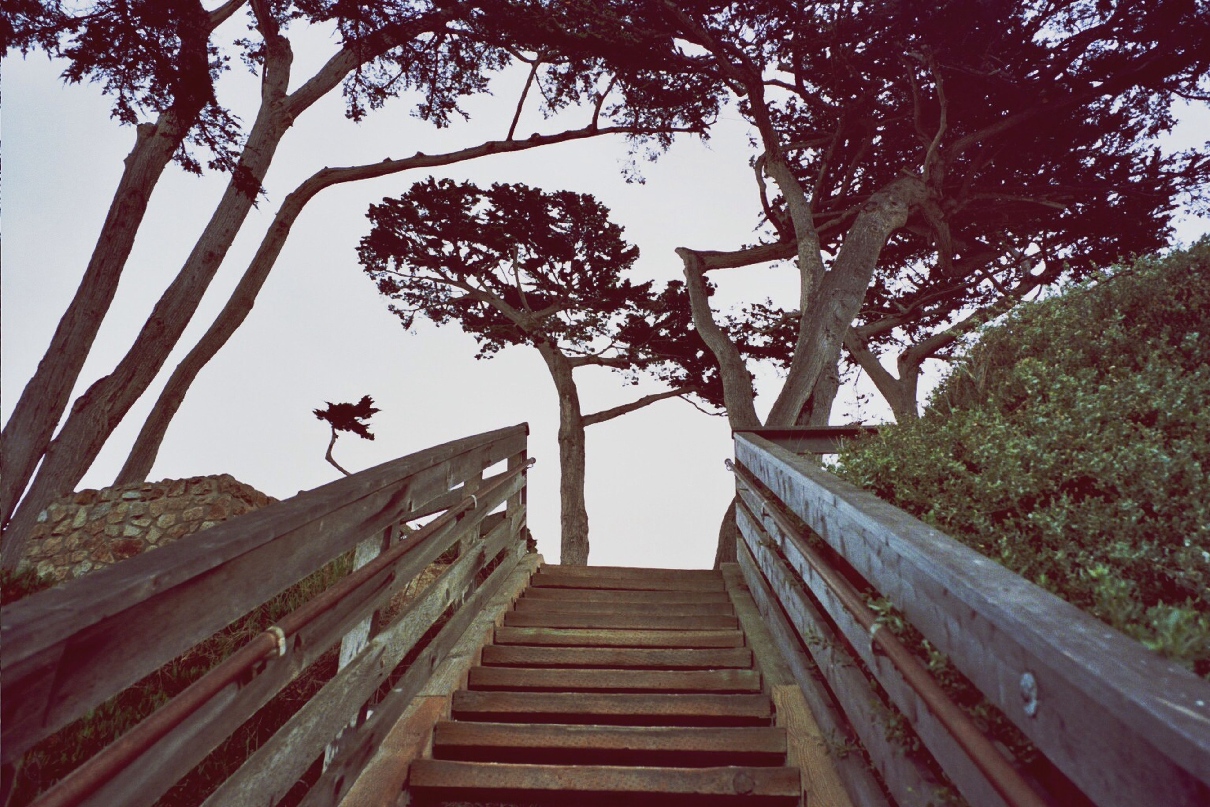 tree, wood - material, the way forward, low angle view, branch, nature, railing, clear sky, boardwalk, growth, steps, wood, full length, forest, wooden, tree trunk, outdoors, sky, day, sunlight