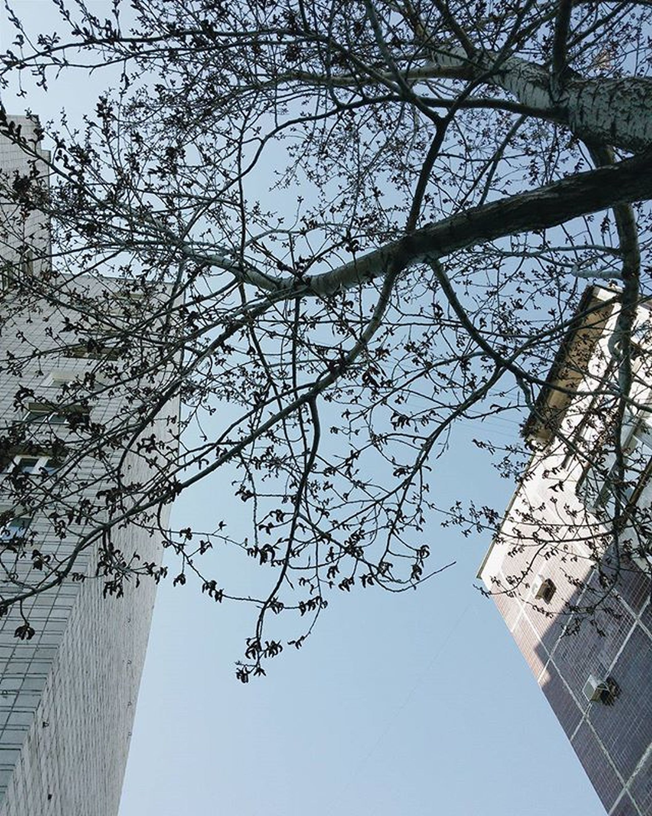 building exterior, architecture, built structure, low angle view, tree, branch, city, clear sky, bare tree, sky, building, tower, tall - high, day, outdoors, no people, sunlight, church, skyscraper, residential building