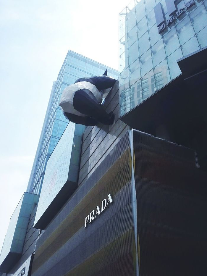 Hi! Taking Photos Check This Out Hello World Hanging Out China Streets On The Road Enjoying Life Building Outdoors City View  Light And Shadow On The Move China Photos Morning Panda Panda Bear Animal Cute