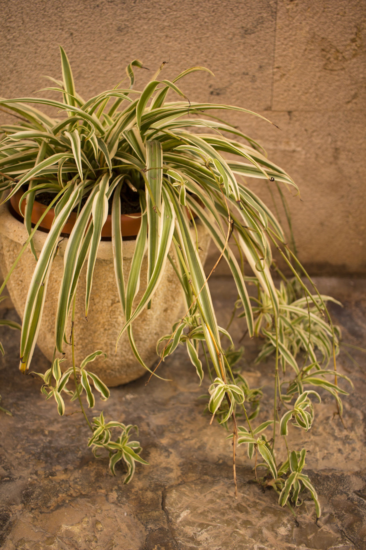 Decoration Gardening Green Growth Offspring Plant