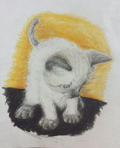 Cat Sweet Art Pencil Drawing Zeichnung  Buntstift Love Getting Inspired Inspired Kitten 💞 Meine kleine Kleo 💞