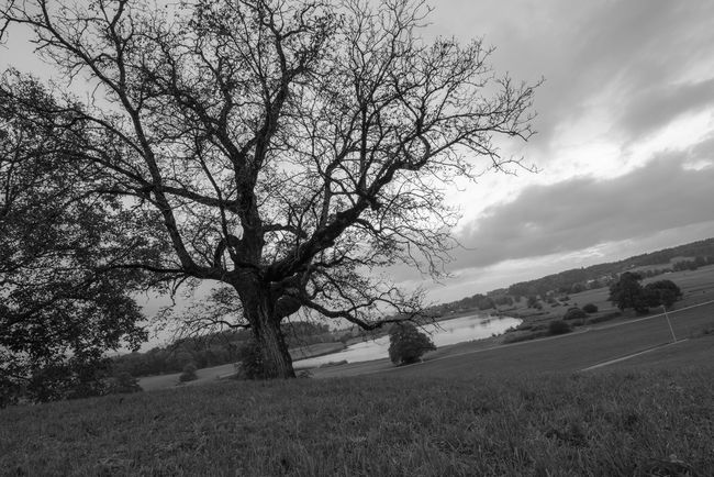 Monochrome Photography Tree Bare Tree Sky Scenics Landscape Beauty In Nature Nature Outdoors Countryside Nikon D810 Tamron 15-30mm Lowepro Manfrotto Lützelsee Hombrechtikon Schweiz Switzerland Switzerlandpictures See Lake