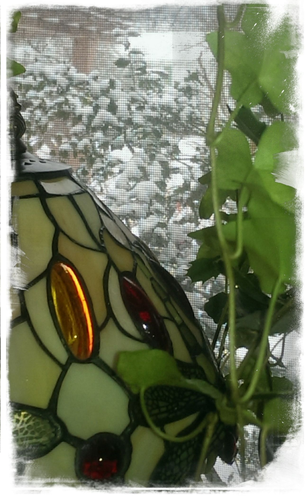 Just woke and see what I see this morning out my front window. Check This Out Hello World Letitsnowletitsnowletitsnow