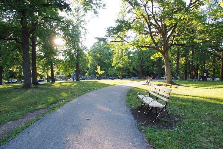 Path Bench Park Walking Around Enjoying The Sun