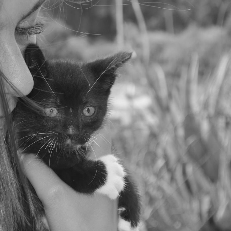 Catlovers Cat_collection Cats Of EyeEm Cat Eyes Animal_collection EyeEm Animal Lover