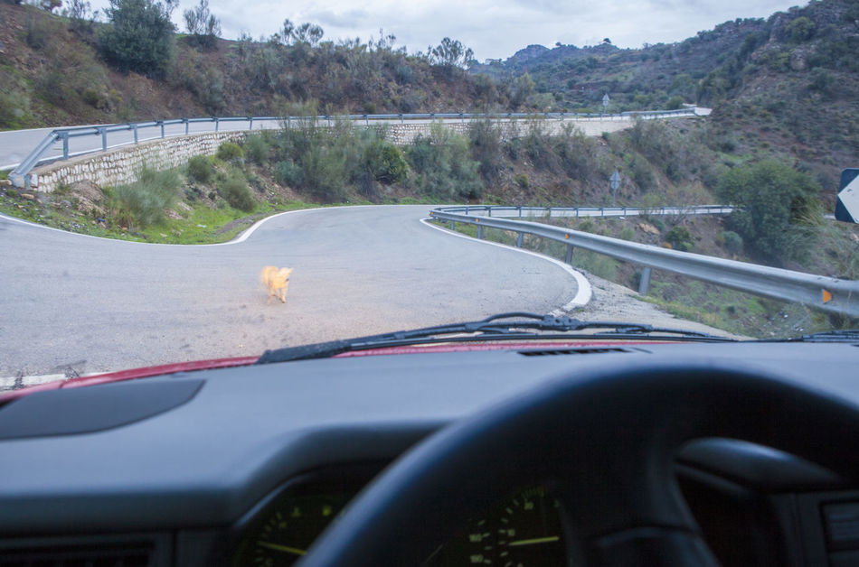 Dog crossing by narrow mountain curvy road. Motion blurred Bridge - Man Made Structure Car Car Interior Close-up Day Driving Highway Journey Mode Of Transport No People Outdoors Road Steering Wheel The Way Forward Transportation Tree