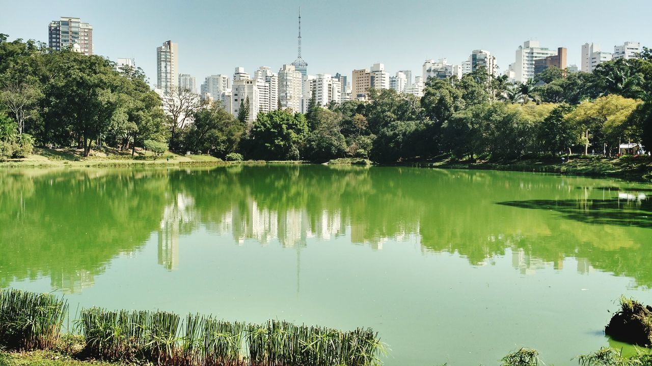 Reflection Tree Water No People Lake Outdoors Building Exterior Day Sky Nature Skyscraper Architecture Aclimação São Paulo Parqueaclimacao Scenics Tranquility Tranquil Scene Horizon Over Water Postcard FamilyTime Tourist Attraction  Beauty In Nature Nature Tree Plant