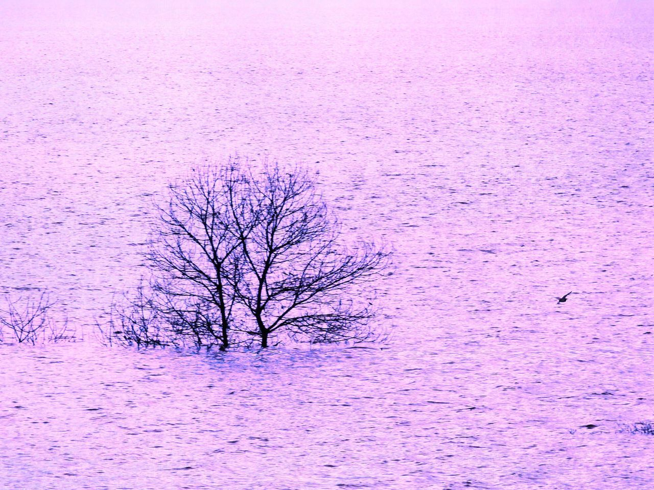 Bare Tree Snow Cold Temperature Beauty In Nature Purple Winter Nature Tree Branch (null) Tranquil Scene Tranquility Pink Color Field Landscape Outdoors Lone Day No People