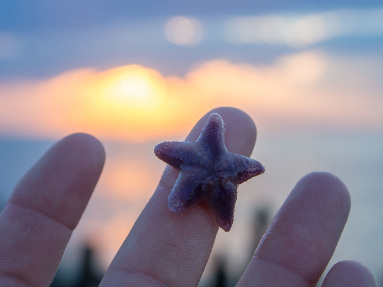 ⭐️ Adult Adults Only Beach Close-up Day Focus On Foreground Human Body Part Human Hand Leisure Activity Lifestyles One Person Outdoors People Sea Sky Starfish  Starfish At Beach Sunlight Vacations