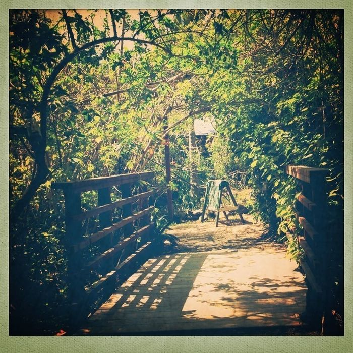 Nature San Diego Buena Creek Gardens