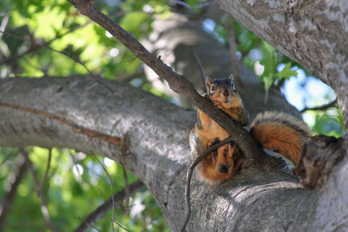 Squirrel Tree Funny Nature Animal Wildlife Animals In The Wild One Animal Tree Animal Themes Animal Mammal