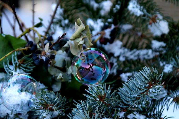 Soap Bubbles Beauty In Nature Close-up Cold Days Fragility Frozen Hello World Nature No People Outdoors Soap Bubbles Taking Pictures Tireless Wintertime