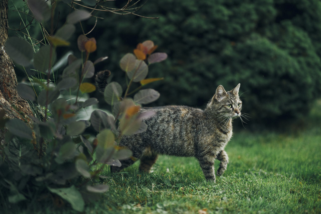 Lazy Sunday in Mielec, Poland. Animal Themes Day Domestic Animals Domestic Cat Grass Growth Mammal Nature No People One Animal Outdoors Pets Plant