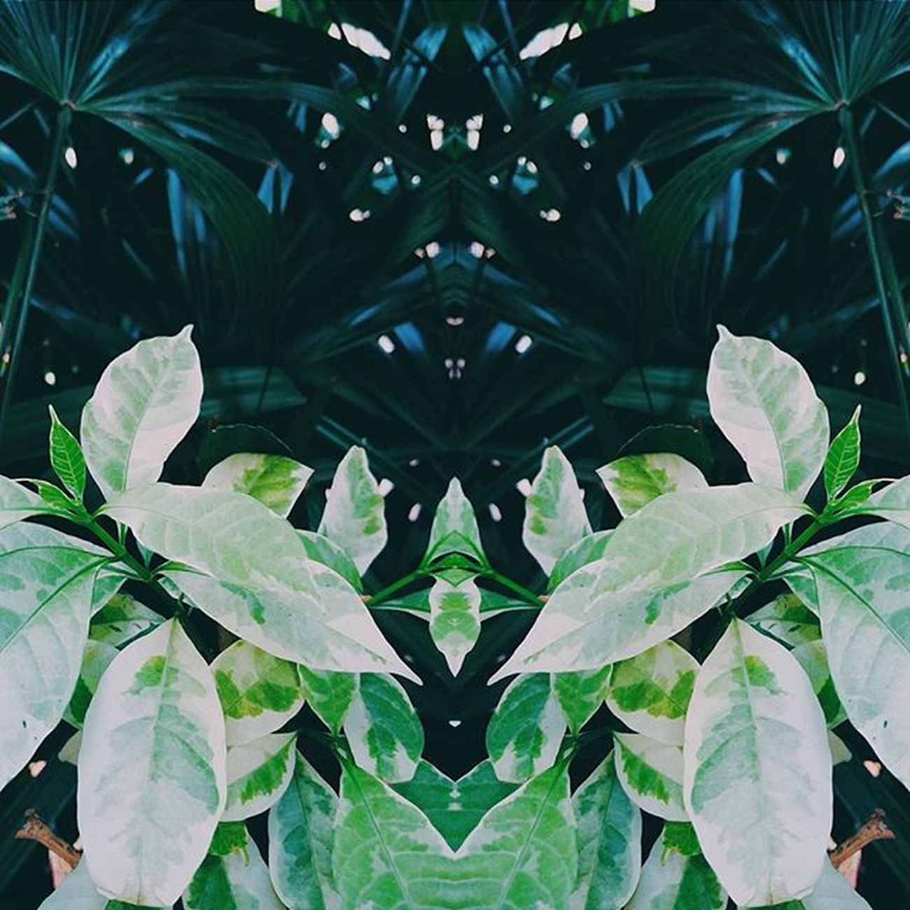 VSCO Green Plants Igers Igersindia Nature Symmetry Mirrorart Vscocam