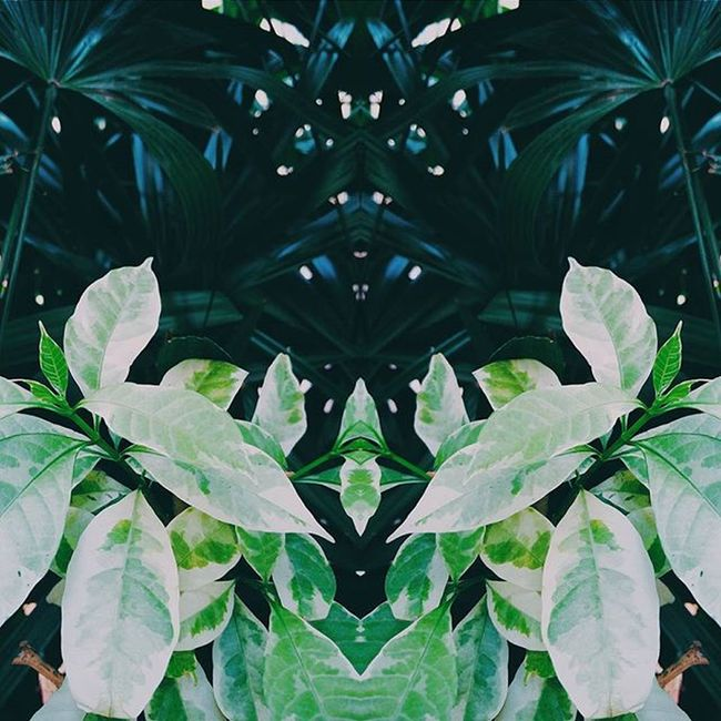 VSCO Green Plants Igers Igersindia Nature Symmetry Mirrorart Vscocam