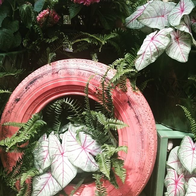 Sometimes old Tires can be Beautiful Plants Outdoordecoration Dewaynes Smithfield NC