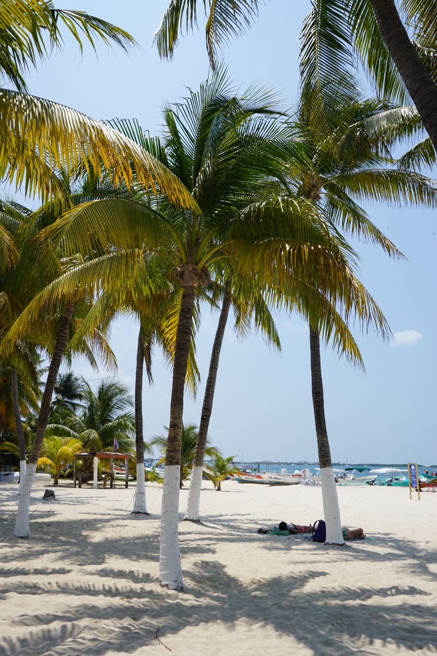 2016 Beach Beauty In Nature Clear Sky Isla Mujeres Mexico Nature Outdoors Palm Tree Relaxation Sand Sea Shadow Sky Tourism Tree Vacations Water イスラムヘーレス ビーチ メキシコ ヤシの木