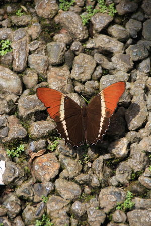 Animal Themes Animal Wing Animals In The Wild Butterfly - Insect Insect Nature No People One Animal