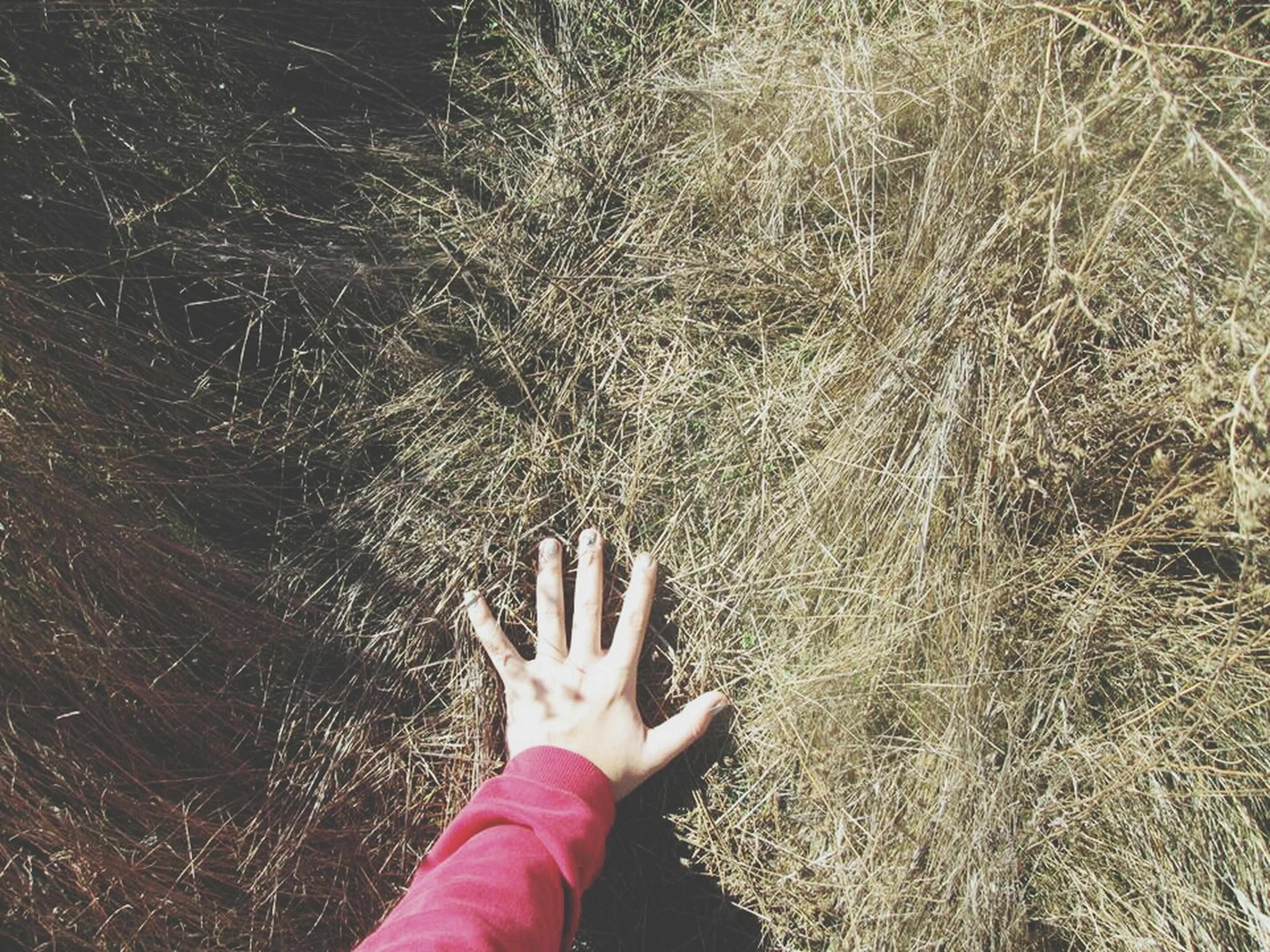 person, personal perspective, lifestyles, low section, leisure activity, part of, barefoot, unrecognizable person, grass, holding, human foot, human finger, field, cropped, outdoors