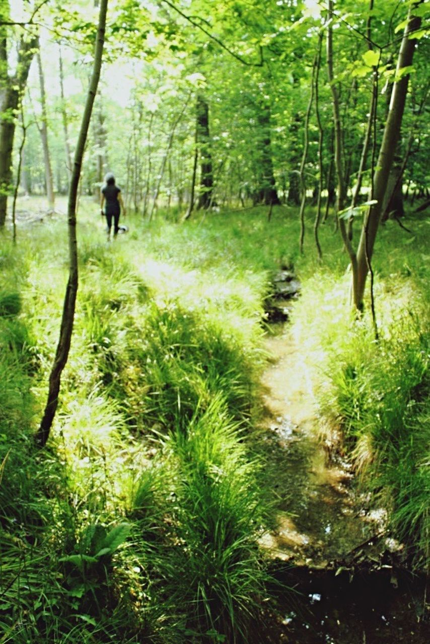 tree, nature, forest, grass, growth, day, outdoors, plant, one person, people