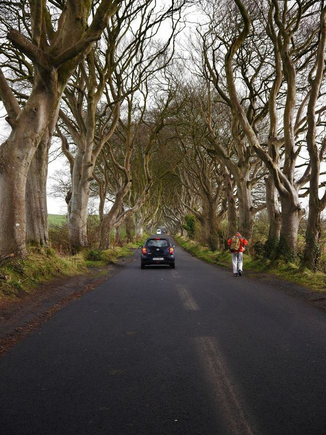EyeEmNewHere man vs machine vs nature DarkHedges Belfast Got Miles Away The Dark Hedges Gameofthrones Break The Mold BYOPaper! The Photojournalist - 2017 EyeEm Awards The Street Photographer - 2017 EyeEm Awards The Great Outdoors - 2017 EyeEm Awards Tourist Destination Travel Destinations Nature Mothernature Tranquil Scene Let's Go. Together. EyeEm Selects Breathing Space The Week On EyeEm Your Ticket To Europe Mix Yourself A Good Time