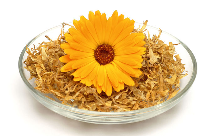 Medicinal plant Calendula officinalis, blossom Art Beauty In Nature Blossom Bowl Calendula Calendula Flowerheads Calendula Flowers Calendula Officinalis Circle Close-up Creativity Flower Flower Head Fragility Freshness Growth Large Group Of Objects Medicinal Plant Medicinal Plants No People Petal Studio Shot Vibrant Color White Background Yellow
