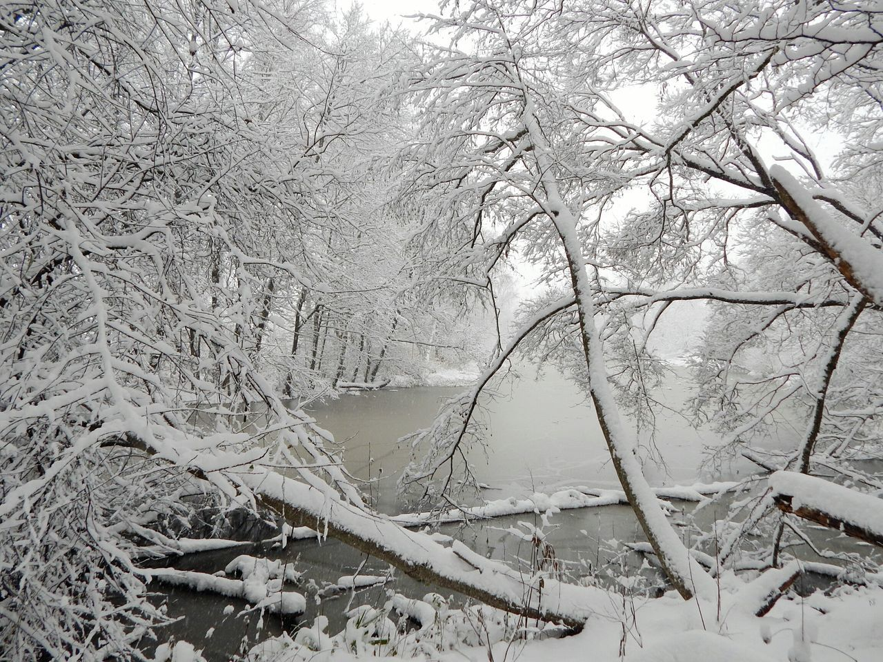 Tree Nature No People Growth Beauty In Nature Outdoors Branch Day Backgrounds Close-up Sky Non-urban Scene Snow Riga Latvia Forest Winter Beauty In Nature Nature Ice Lake