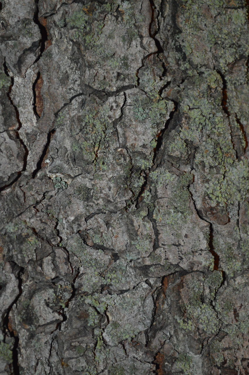 textured, full frame, backgrounds, cracked, rough, no people, pattern, built structure, gray, close-up, tree trunk, nature, tree, day, architecture, outdoors