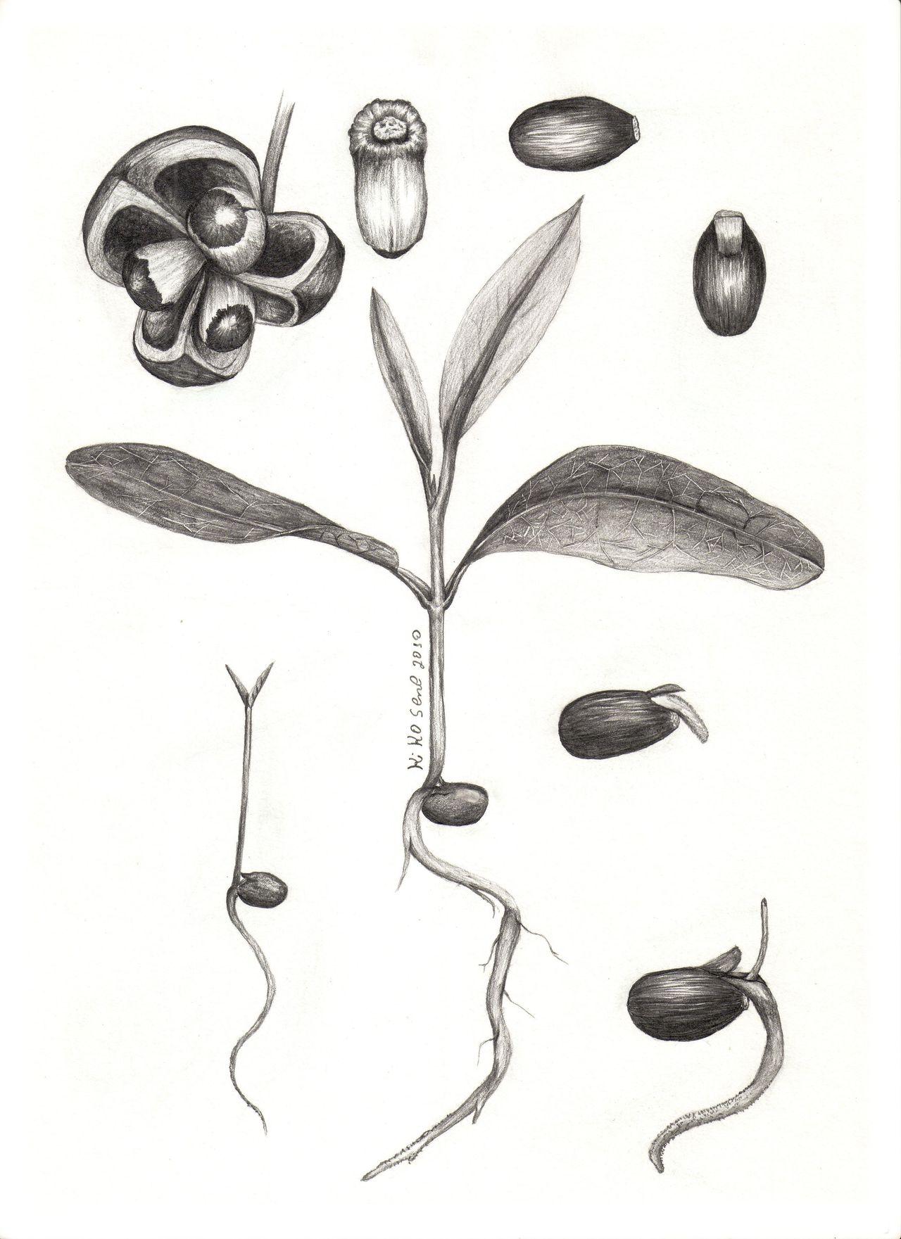 First Eyeem Photo Ilustração  Gallery Photography Details Detalhes Kiko Sene Ilustrasion