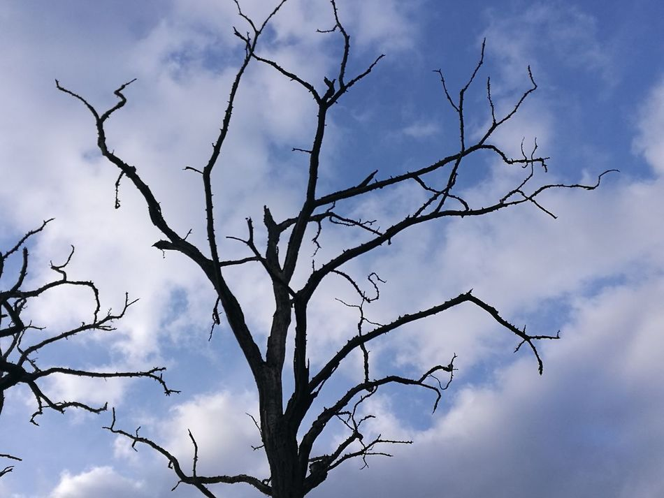 Silhouette Blue Bare Tree Cloud - Sky Architecture Tranquility Prospettive No People