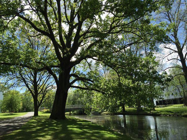 EyeEm Nature Lover Nature EyeEm Best Shots Oker Water Braunschweig Brücke Trees Spring