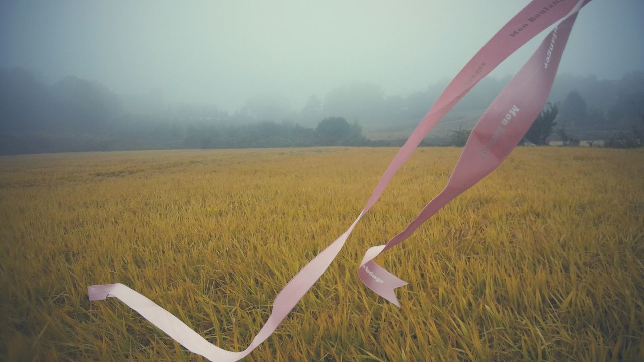 분홍색 리본 Ribbon Foggy Day