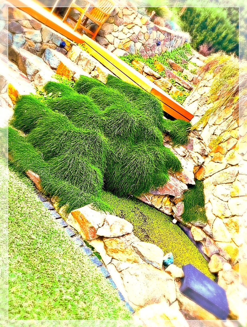 green color, high angle view, no people, day, outdoors, grass, leaf, nature, close-up