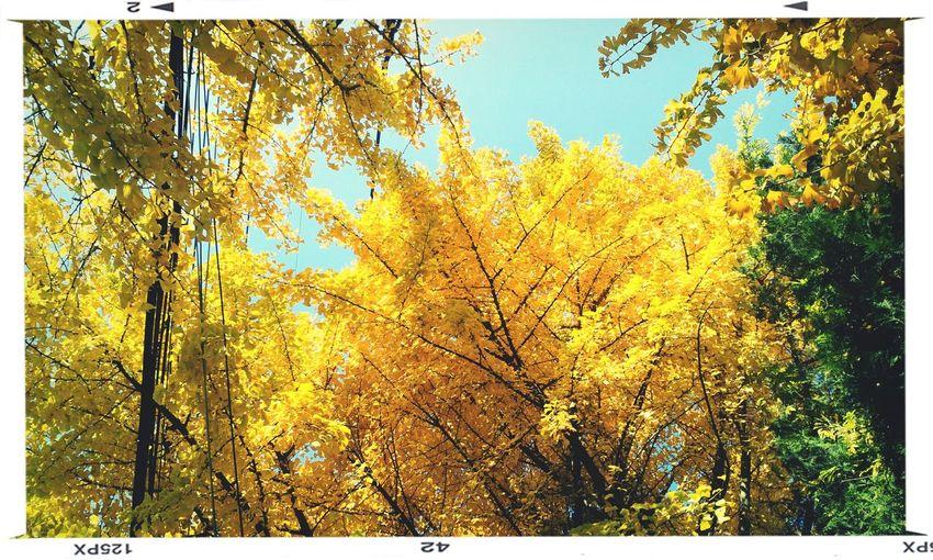 석수에서 가산 사이 둘레길에서 발견한 노란가을.