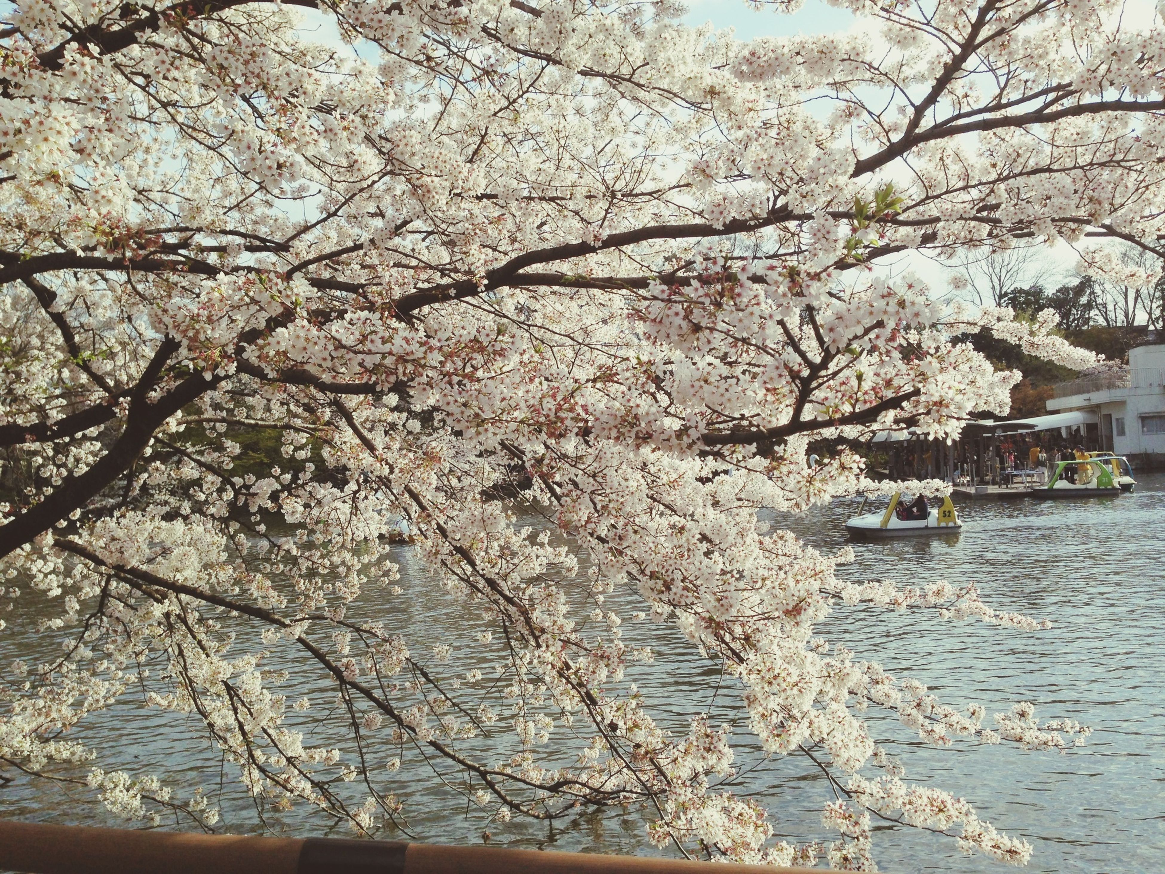 tree, water, branch, flower, building exterior, built structure, architecture, nature, beauty in nature, growth, bare tree, waterfront, river, sky, day, cherry blossom, outdoors, tranquility, rippled, tranquil scene