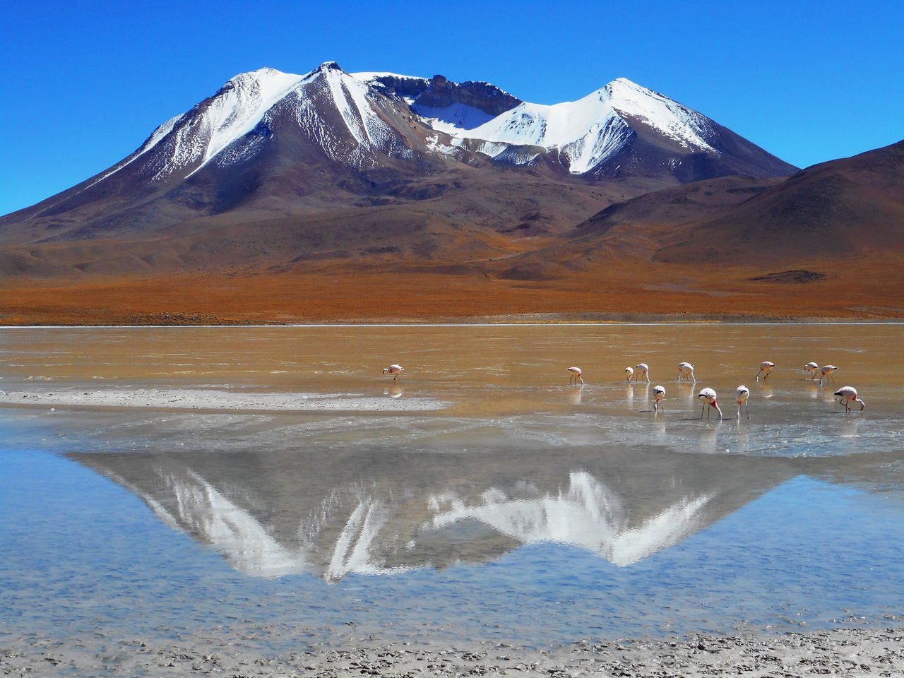 Bolivia Cold Temperature Crystal Clear Waters Day Flamingo Lake Landscape Mountain Mountain Peak Mountain Range Nature No People Outdoors Reflection Scenics Snow Water